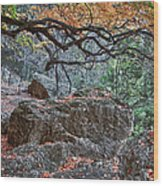 Lost Maples Hiking Trail Wood Print