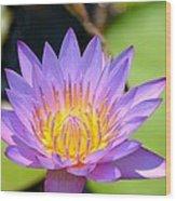 Lotus Aglow Wood Print