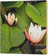 Lotus B Position Wood Print