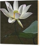 Lotus Beauty Wood Print