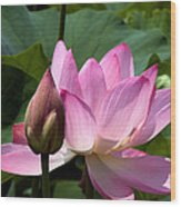 Lotus Bud--here Is How You Do It Dl065 Wood Print