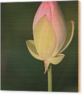 Lotus Bud Wood Print