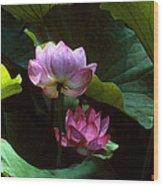 Lotus--dimensions 20h Wood Print