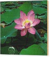 Lotus Flower And Capsule 24a Wood Print