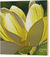 Lotus Flower Wood Print
