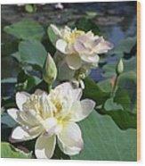 Lotus in Bright Sunlight Wood Print