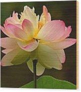 Lotus In The Dark Water Wood Print