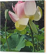 Lotus Lily Standing Tall Wood Print