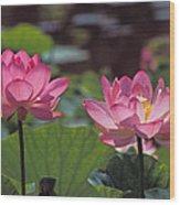Lotus Pair 24m Wood Print