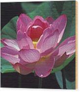 Lotus--secrets Within 24k Wood Print