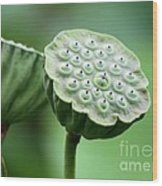 Lotus Seed Pods Wood Print