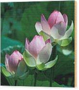 Lotus--stepping Stones 24p Wood Print