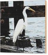 Louisiana Egret Wood Print