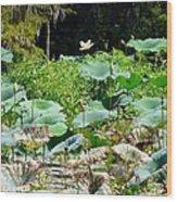 Louisiana Lily Pads Wood Print