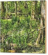 Louisiana Wetland Wood Print