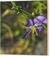 Louisiana Wildflower Wood Print