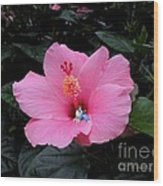 Lounging In A Hibiscus Wood Print by Renee Trenholm