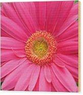 Love Daisy Wood Print