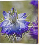 Love In The Mist - Nigella Wood Print