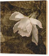 Love Letter Ix Cape Jasmine Gardenia Wood Print by Jai Johnson