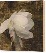 Love Letter Viii Cape Jasmine Gardenia Wood Print by Jai Johnson