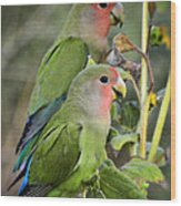 Lovebird Couple  Wood Print