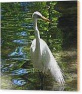 Lovely Bird Wood Print