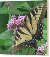 Lovely Butterfly Wood Print