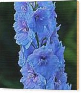Lovely Larkspur Blue Wood Print