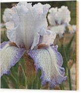 Lovely Lavender Wood Print