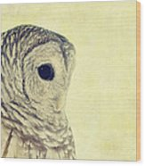 Lovely Lucy Barred Owl Wood Print