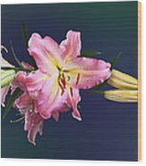Lovely Pink Lilies Wood Print