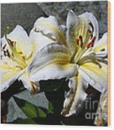 Lovely Sunlit Lily Wood Print