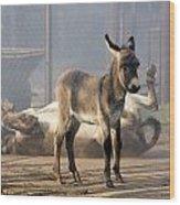 Loving Family Of Donkeys Wood Print by Odon Czintos