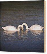 Loving Swans Wood Print