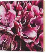Low Key Pink Azalea Wood Print