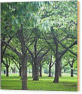 Low Trees In Flushing Meadows-corona Park Wood Print by Ryan McVay
