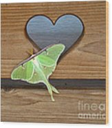 Luna Moth In Love Wood Print
