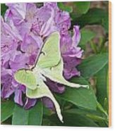 Luna Moth On Rhododendron 1 Wood Print