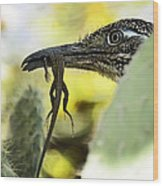 Lunch With A Roadrunner  Wood Print