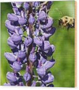 Lupine And Bee Wood Print