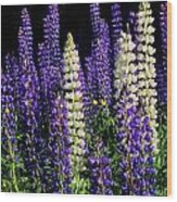 Lupine Flowers Wood Print