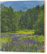 Lupine In Sugar Hill New Hampshire Wood Print