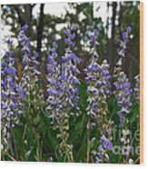 Lupine Patch Wood Print