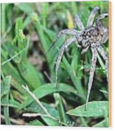 Lurking Spider In The Grass Wood Print
