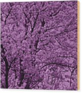 Lush Lavender Wood Print