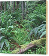 Lush Rain Forest In Olympic National Park Wood Print