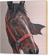 Lynette's Quarter Horse Wood Print