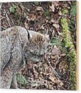 Lynx - 0004 Wood Print