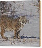 Lynx In Winter Wood Print